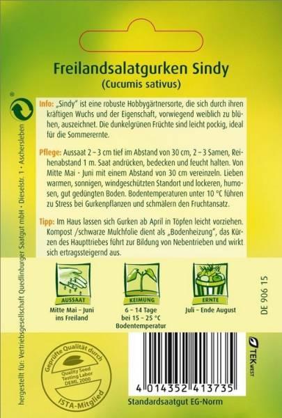 Freiland-Salatgurke Sindy