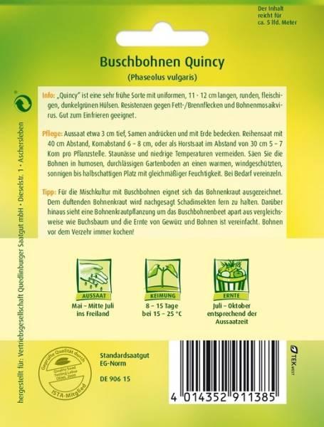 Buschbohnen Quincy
